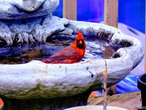 cardinal bath time