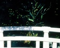 Landscape Oil painting on canvas, bridge near the shrine at Meiji Jinku in Tokyo (thumbnail)