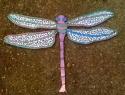 Dragonfly (thumbnail)