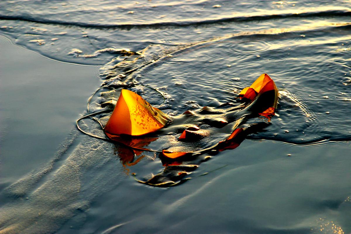 Kelp #65 (large view)