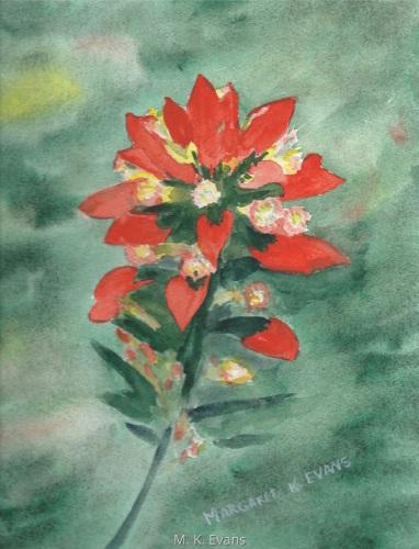 Texas Indian Paintbrush II