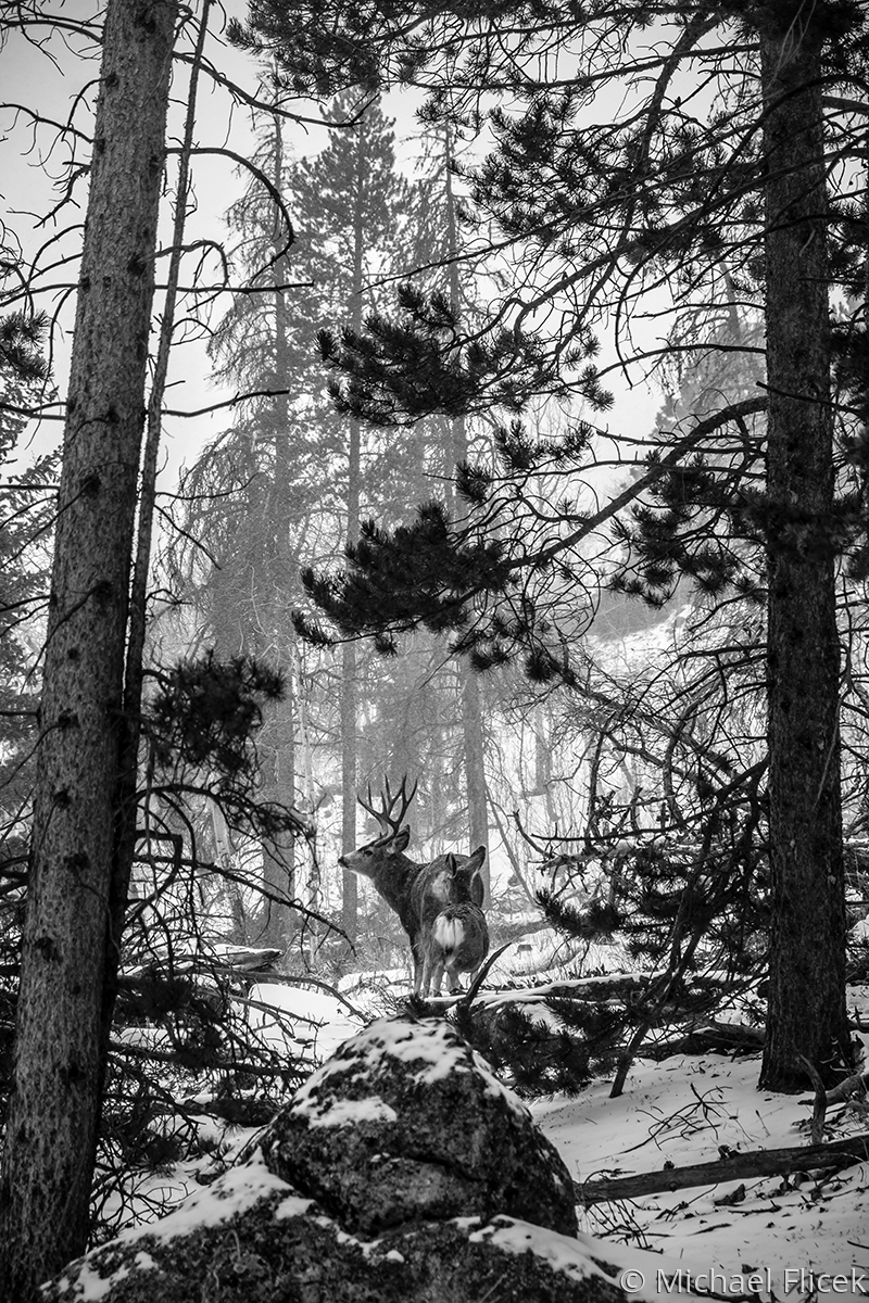 Rut in Rocky Mountain National Park (large view)