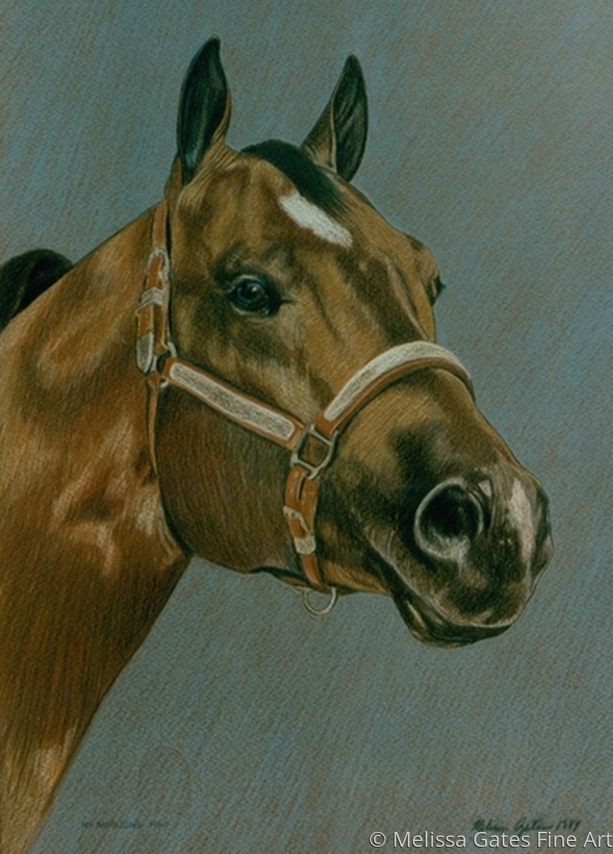 MG207 Quarter horse stallion portrait (large view)