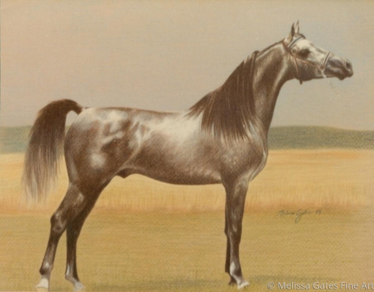 MG203 Arabian Stallion Portrait (large view)