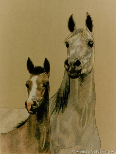 Arabian Mare and Filly Portrait