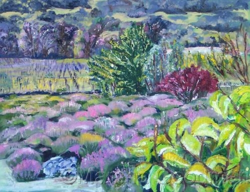 Before the Lavender Blooms (large view)