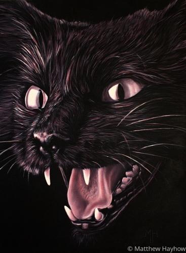 Kitten by Matt Hayhow Art