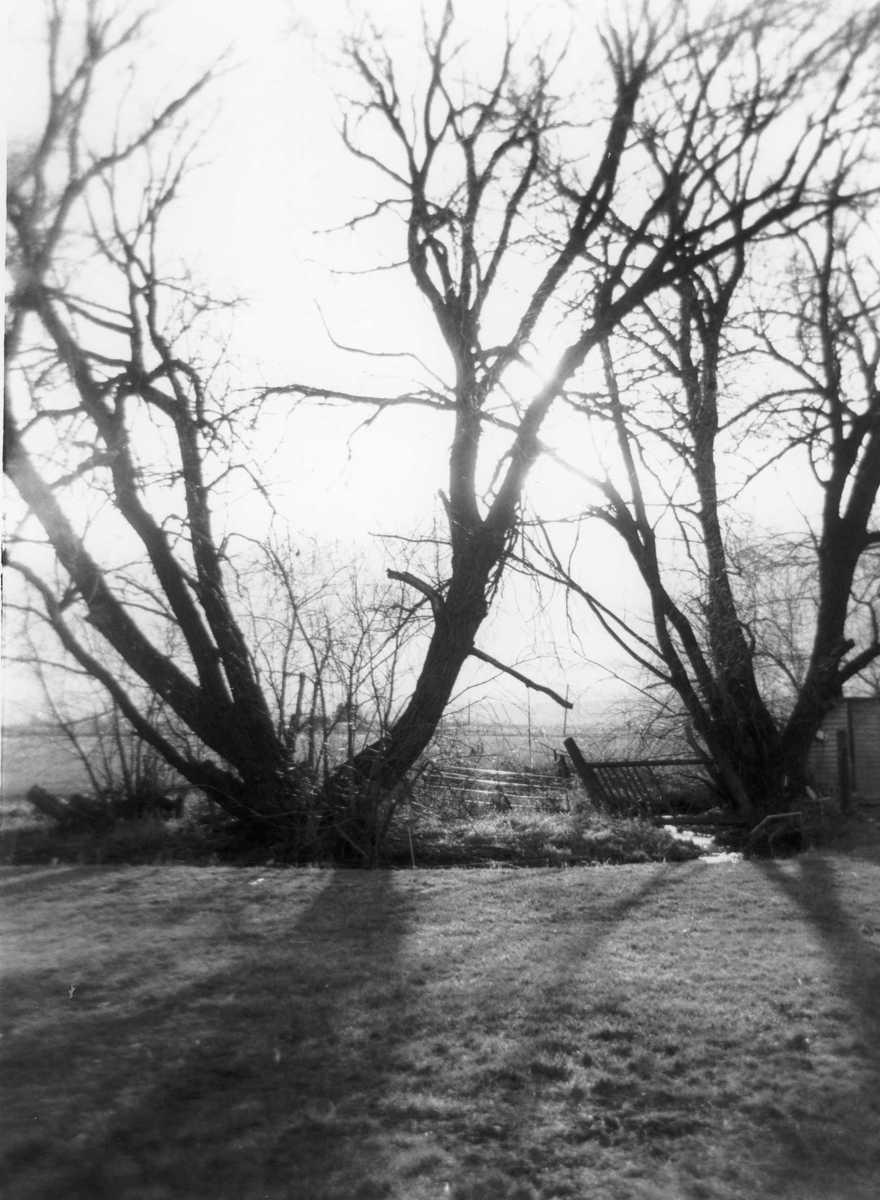 Windbreak (large view)
