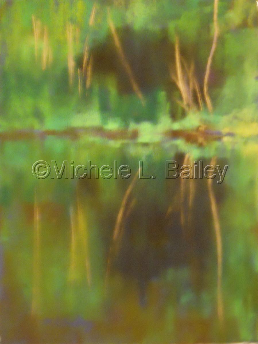 Pond Patterns (large view)