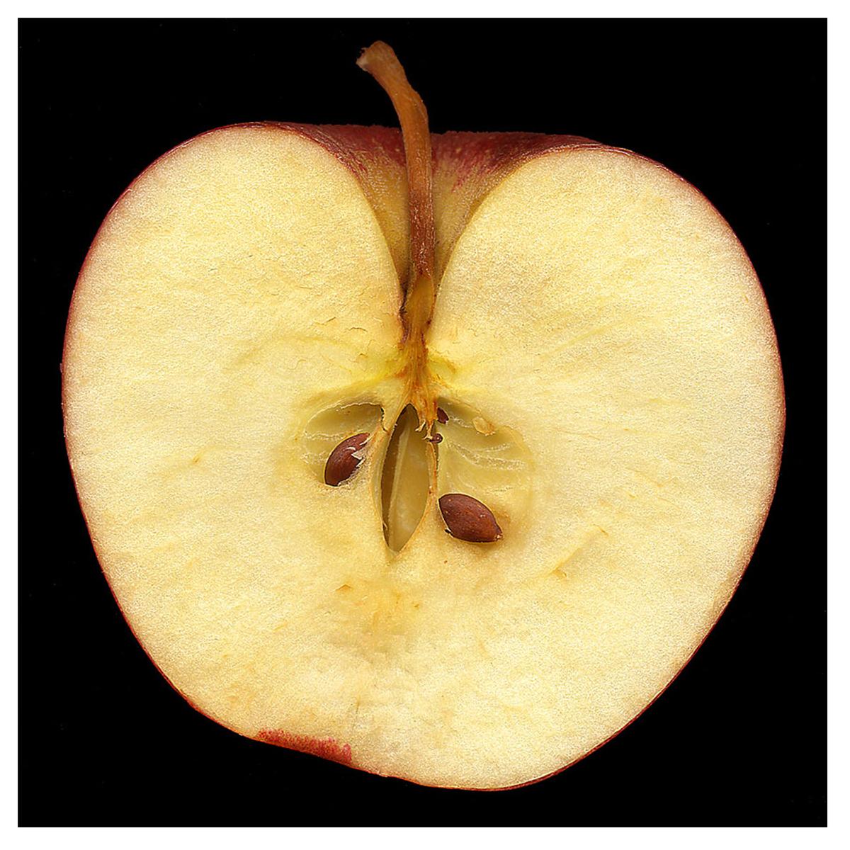 Apple Half (large view)