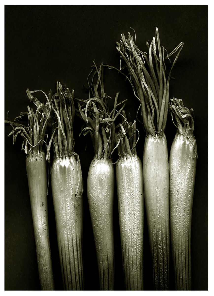 B&W Scallions (large view)