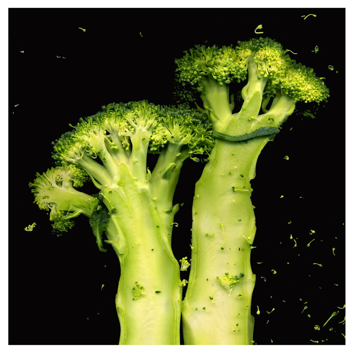 Broccoli Twins (large view)