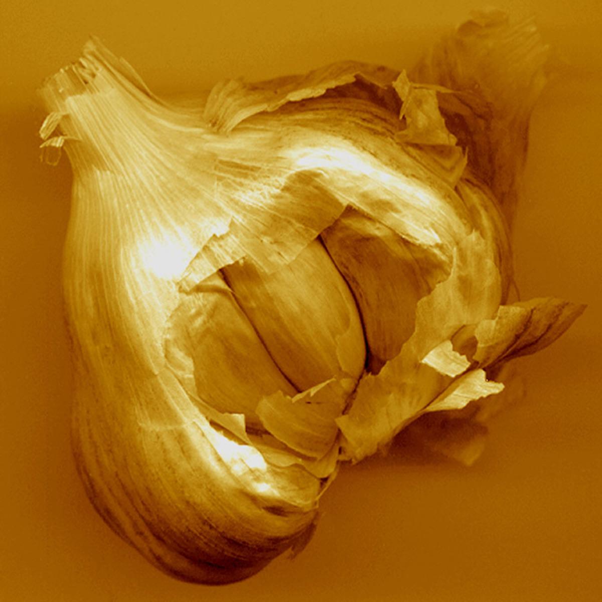 Golden Garlic (large view)