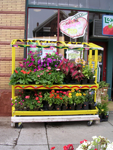 Co-op Flower Stand (large view)
