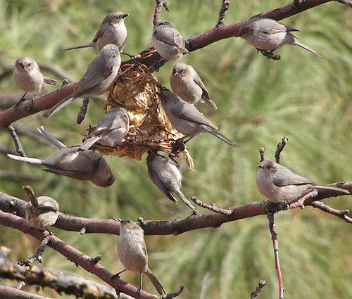 Serenata de la naturaleza: identificación de las canciones del pájaro del bosque del noreste - AMC al aire libre
