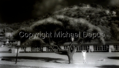 Schoolyard Tree
