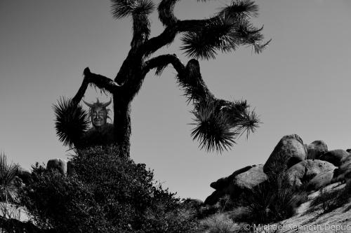 Joshua Tree Devil