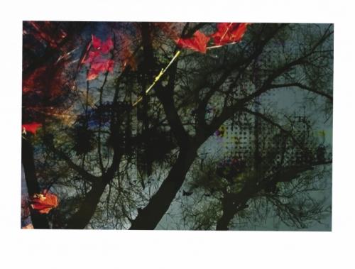 Late Autumn Trees