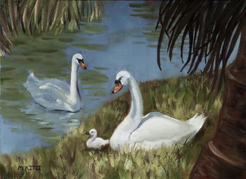 Bonnet House Swans - Ft. Lauderdale, FL