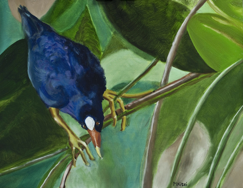 Purple Gallinule - Wakodahatchee Wetlands, FL