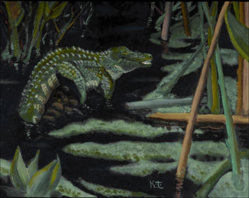 Black Water, Corkscrew Swamp