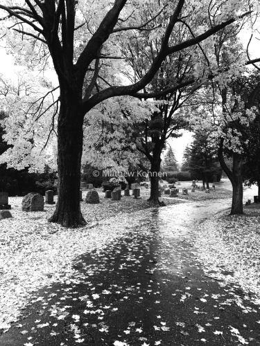 Restful walk by Mathew Kohnen