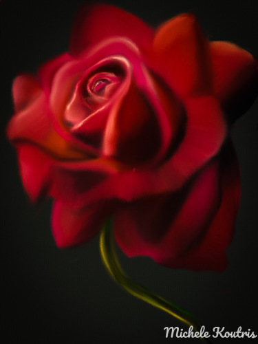 Red Eternity Rose