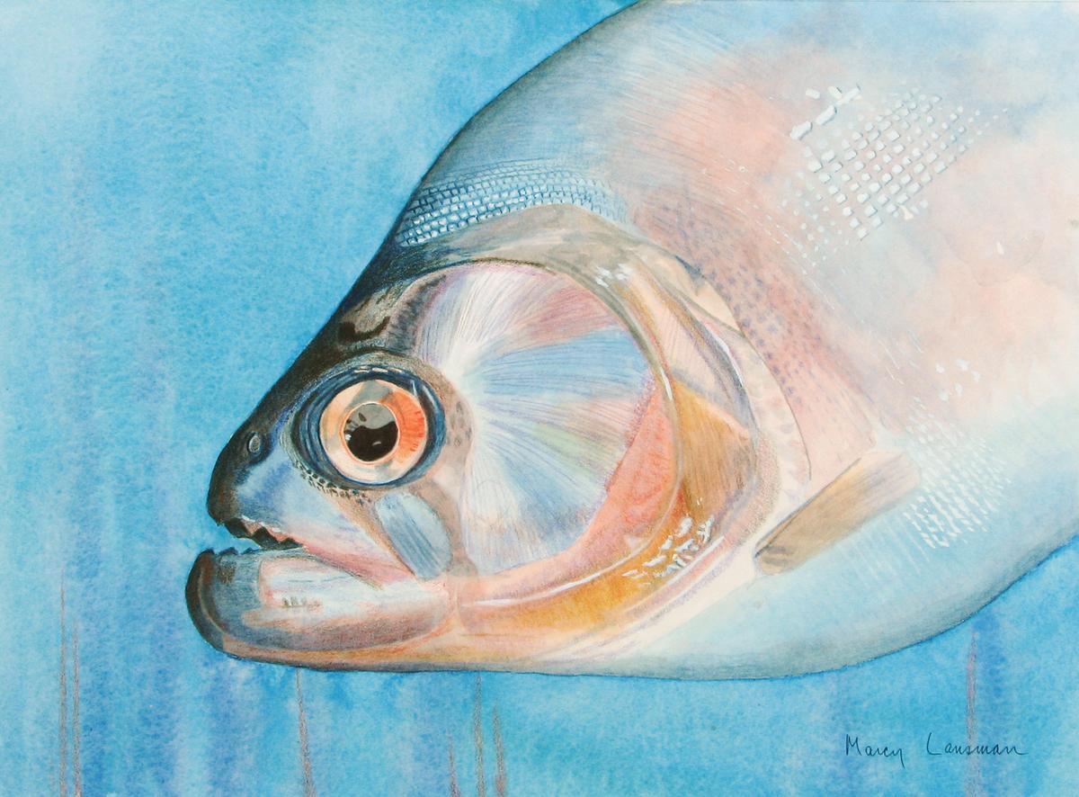 Piranha (large view)
