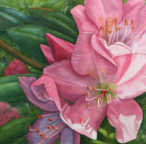 Pink Rhododendron by Marcy Lansman