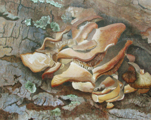 Acrylic painting of white mushrooms growing on the bark of a tree. (large view)