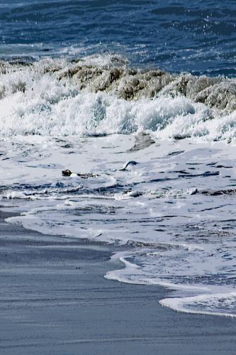 Beach 1 by MARY LEA BRADLEY