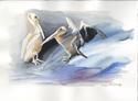 Flirty Pelicans
