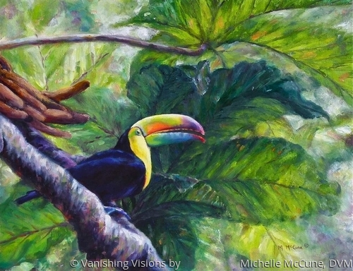 Toucan of the Ticos (large view)
