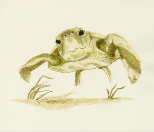 Seastrokin' 2 by Marie Maurgo Cohorn Art