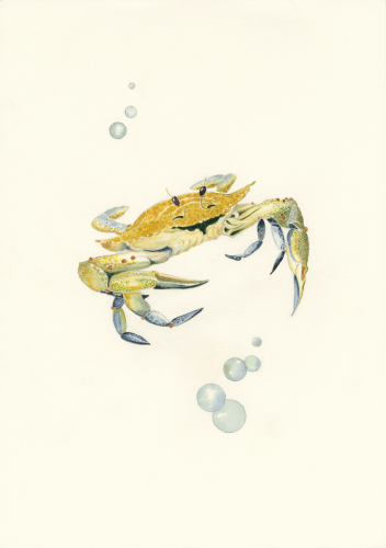 Happy Crab 3 by Marie Maurgo Cohorn Art