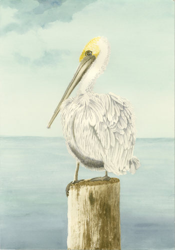 Pelican Posting 4 by Marie Maurgo Cohorn Art