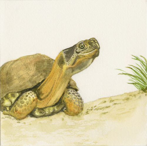 Turtle with grass & sand 5