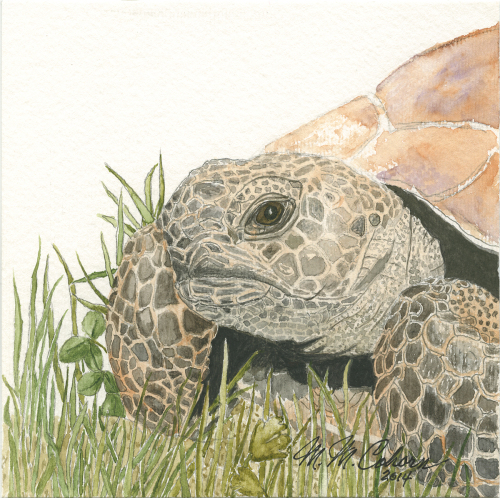 Turtle in the Grass 9