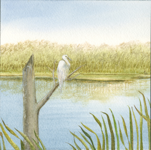 Egret at Rest 13