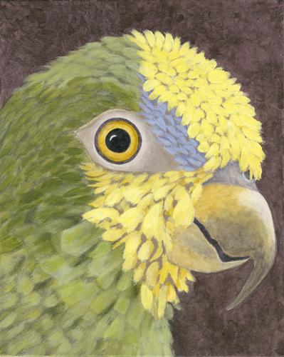 Amazon Parrot, Polly 21