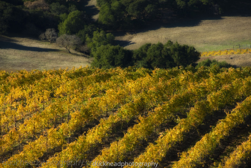 Wine Country Fall 4 by Duckhead Photography