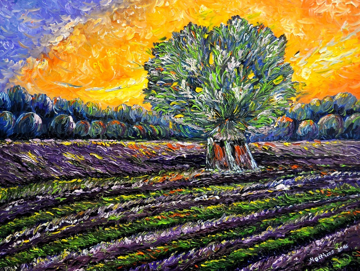 Lavender Field at Sunset     (large view)