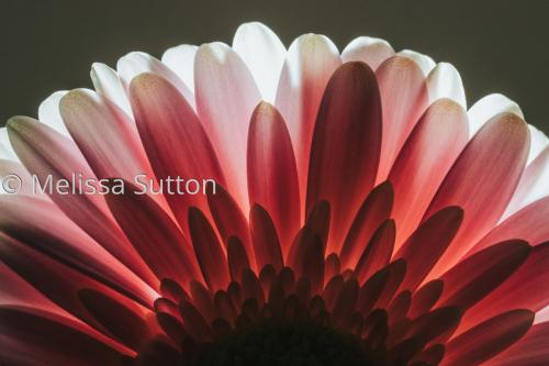 Glowing Flower Rise