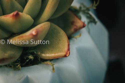 little succulent