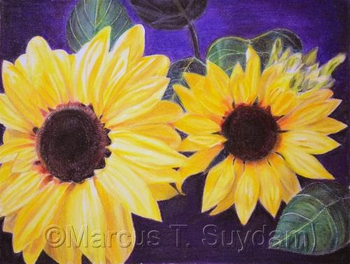 Larisa's Sunflowers