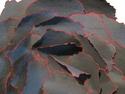 Black Rose (detail) (thumbnail)