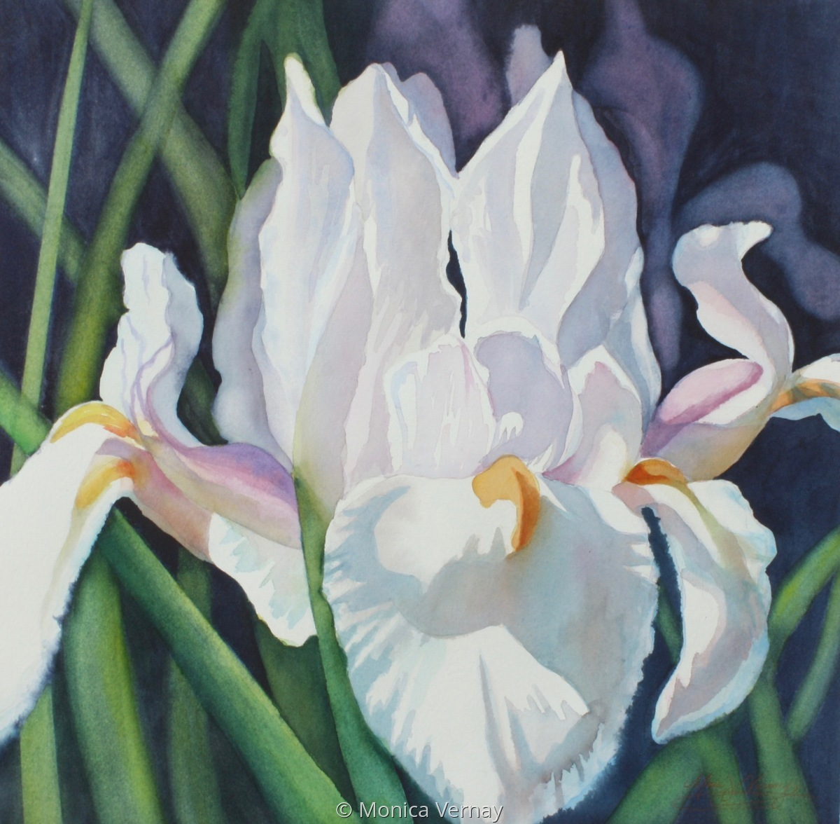 Bold Iris (large view)