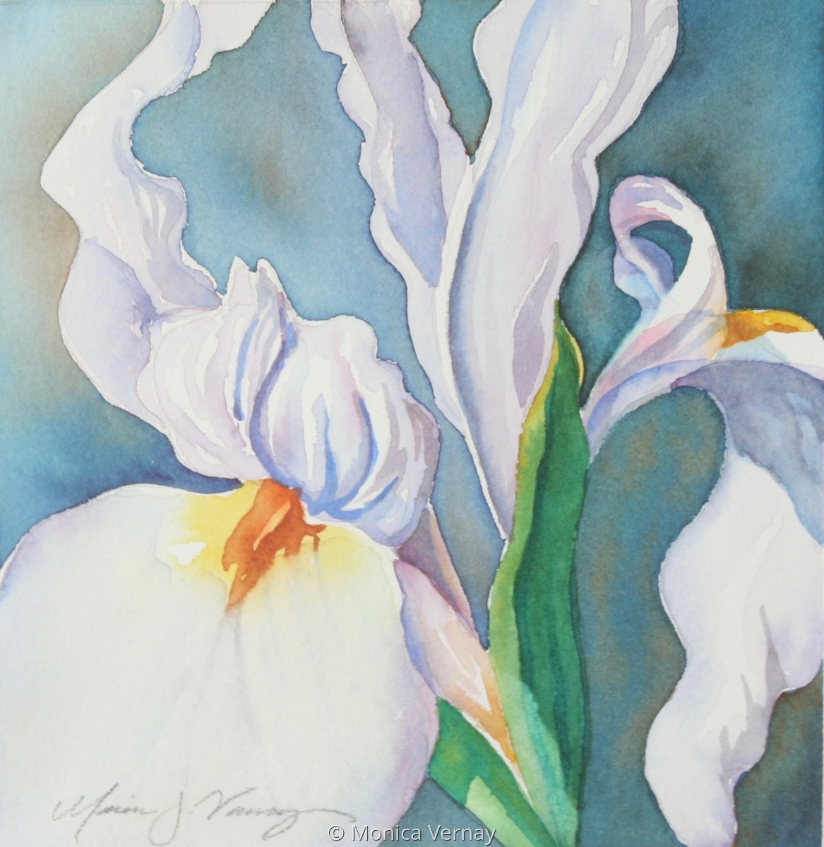 White Iris (large view)