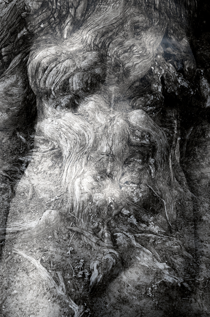 Torso/Cypress (large view)