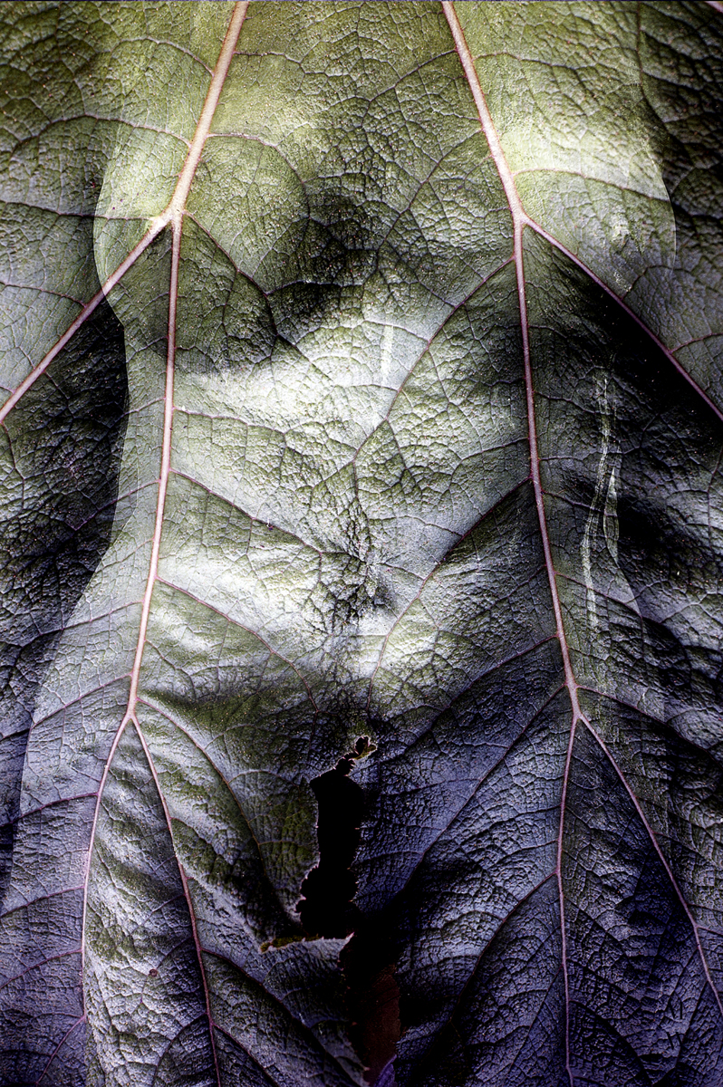 Torso/Leaf (large view)